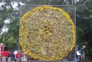 Labor Day Sunflower Project blossoms in 5th year downtown